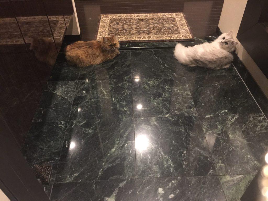 玄関で見送ってくれるペルシャ猫