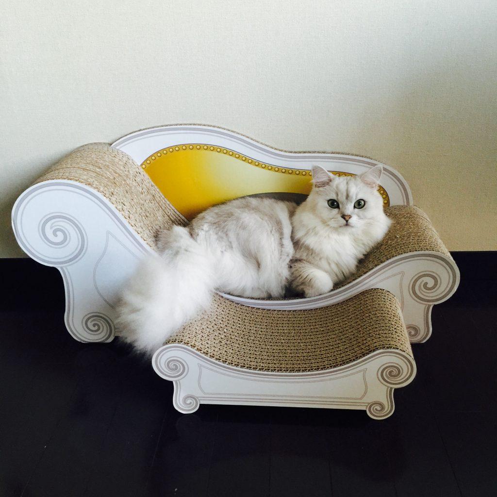 猫のソファーとスツール