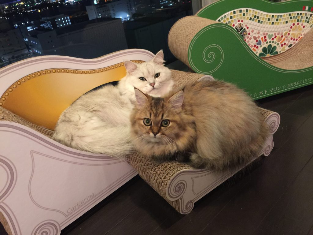 オシャレ猫用インテリアでくつろぐペルシャ猫