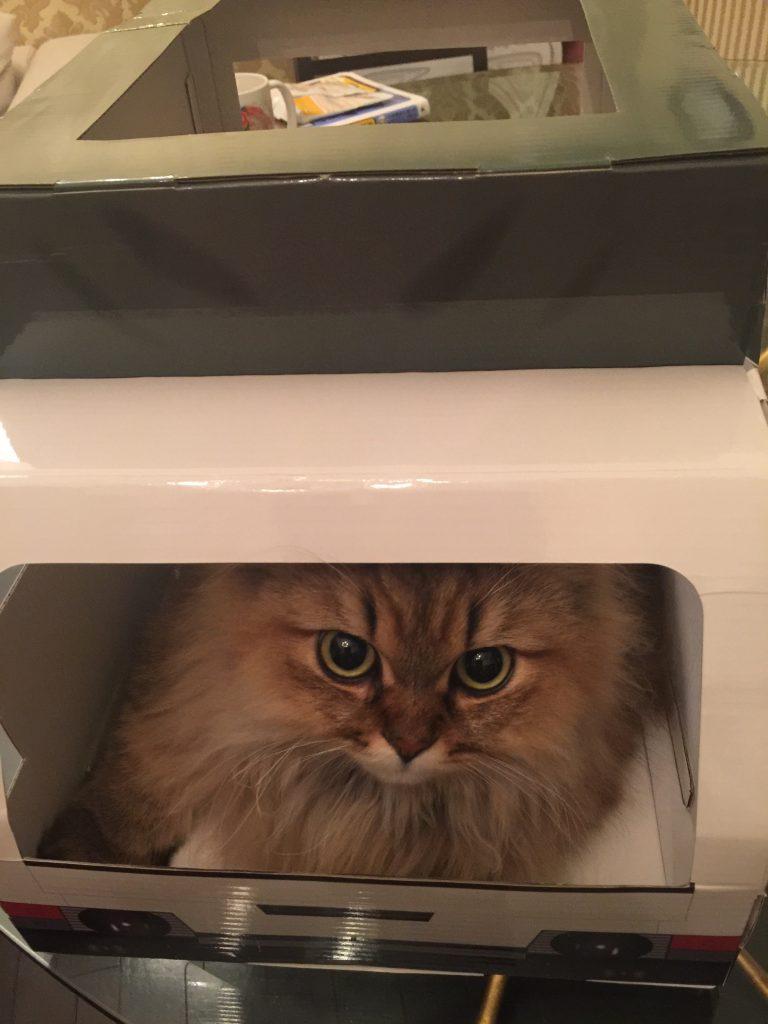 箱に入るペルシャねこ