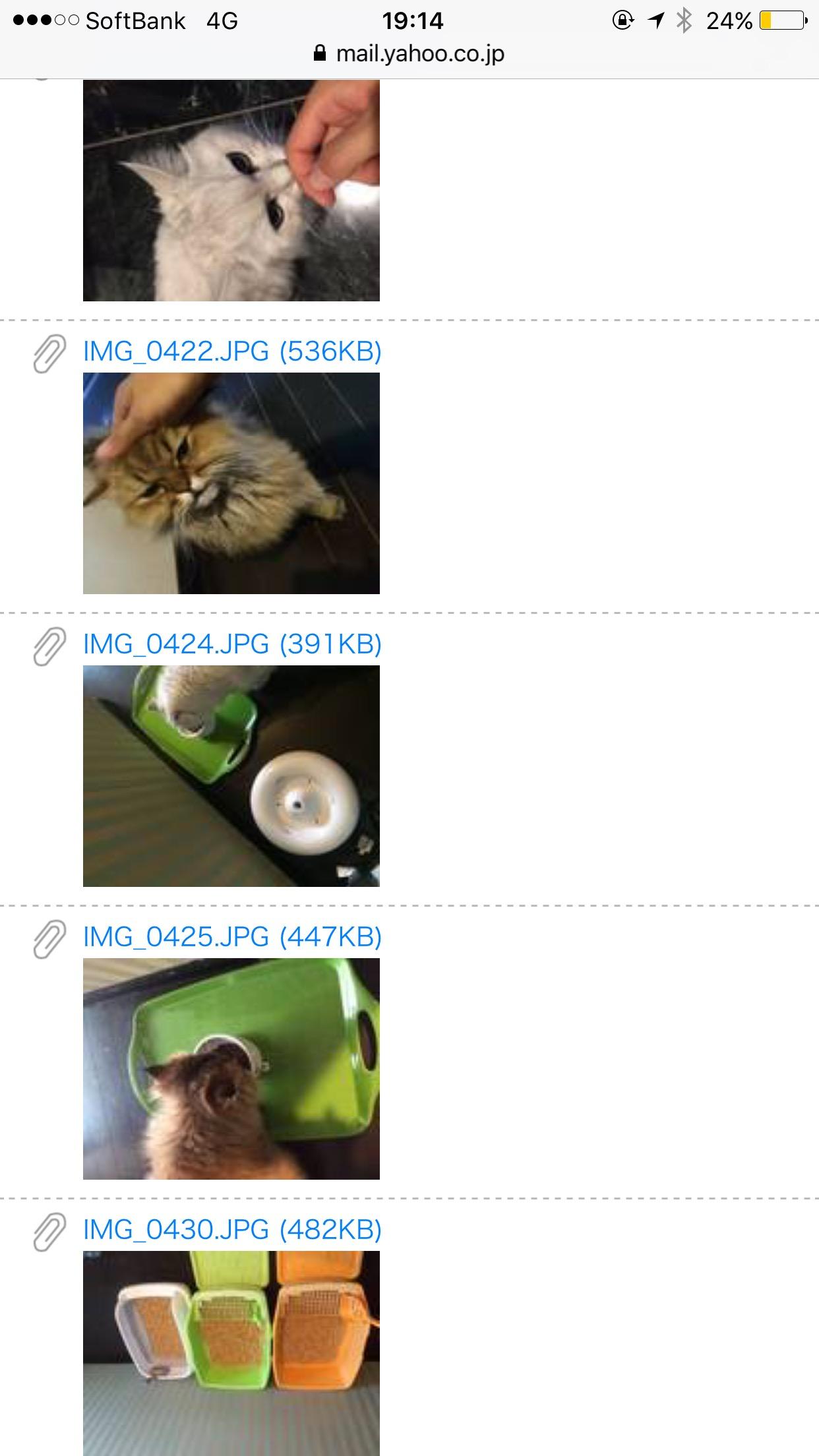 猫のペットシッターさん