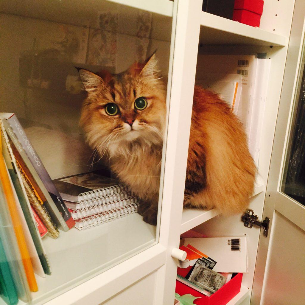 かわいい猫エレナちゃん