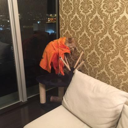 ひとりでキャットタワーで寝る猫