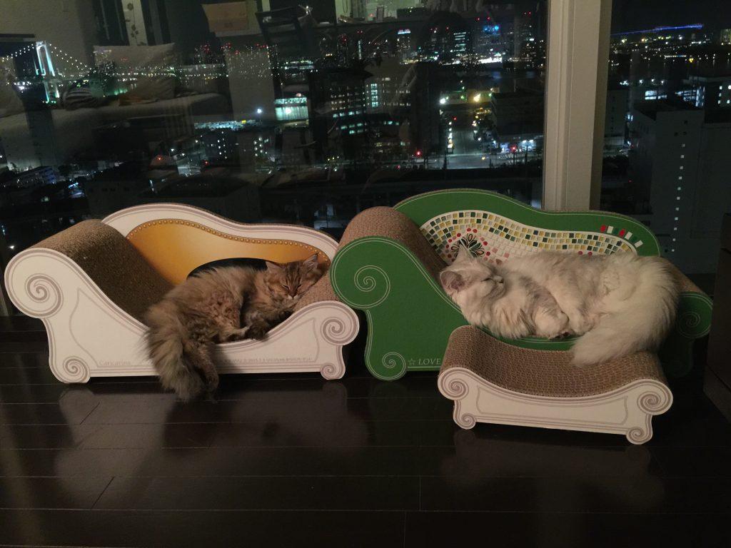 猫ベッドオシャレ