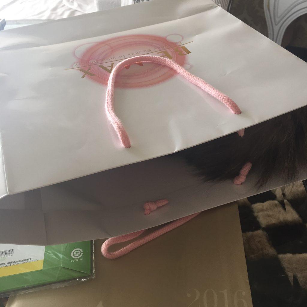 袋に入るペルシャ猫