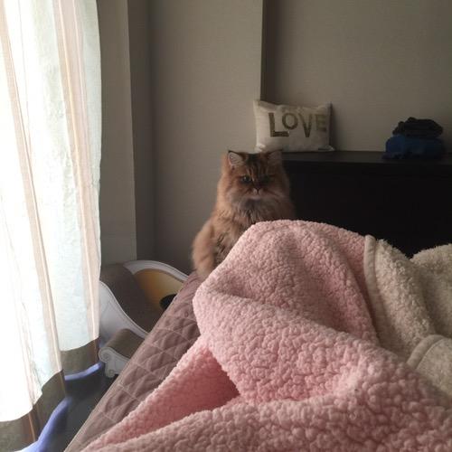 読んだらベッドにきた猫エレナちゃん