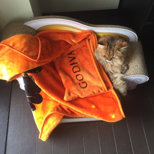 朝のペルシャ猫エレナさん